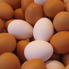 Rising vegetable prices, increased demand make eggs costlier in many parts of the country