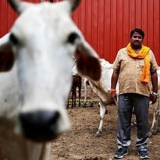 Uttar Pradesh government sets up Cow Protection Committees to ensure gaushalas run efficiently