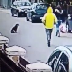 Watch: Stray dog saves unsuspecting woman from being attacked and robbed on the street