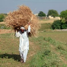 Bad loans in the farm sector rose over 23% in 2017, shows RBI data