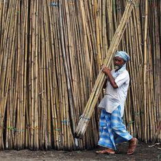 Grass or tree?: A rule reclassifying bamboo claims to benefit tribals – but industry will gain more