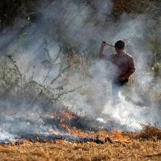 Green court criticises Punjab government for not taking steps to curb stubble burning