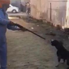 Punjab: Man shoots dead his pet dog, video uploaded on social media