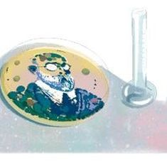 Google honours Robert Koch, the father of modern bacteriology, with a doodle