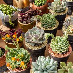 Next time you're gifting someone flowers, consider a gorgeous pot of succulents instead