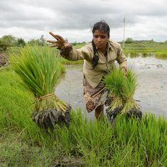 बीते साल ज्यादा बारिश होने के बाद भी खेती की विकास दर कम क्यों रह सकती है?