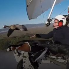 Watch: This man teaches birds to take safe routes by flying alongside them in his plane