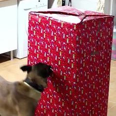 Watch: This dog-owner gave his puppies the best Christmas surprise (it will melt your heart too)