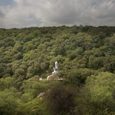Video: How real estate greed threatens to wipe out the ancient forests of the northern Aravallis