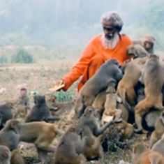 Video:  This man from Uttar Pradesh has been feeding hundreds of monkeys everyday for 40 years