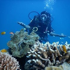 Top 10 February holidays: Go scuba diving in Andamans, enjoy music in Kutch, explore caves in Andhra