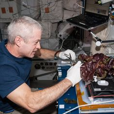 Video: How astronauts grow vegetables while living in outer space, even in the harshest conditions