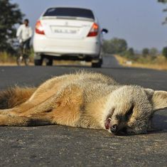 This new mobile app hopes to reduce wildlife deaths on India's roads, railway tracks