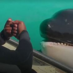 Watch: If you say hello to this dolphin, she will say hello right back. Also byebye.