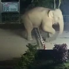 Video: Elephant caught on camera crossing China border into Laos and returning after an hour