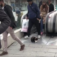 Watch: This cat refused to budge as it lay in front of an escalator blocking a busy subway exit