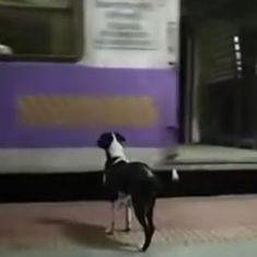 Watch: This dog has been chasing the same train night after night at a Mumbai station