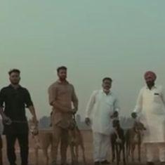 Video: Meet Punjab's racing greyhound Commander, son of Big Mac and Lady Shooter