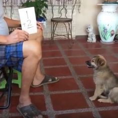 Watch: Can Roscoe the puppy really bark the answers to mathematics problems?