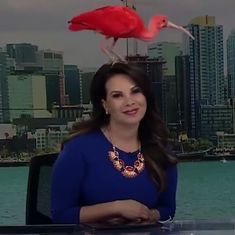 Watch: Two news anchors' broadcast was interrupted when an exotic bird landed on their heads