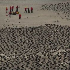 Watch: A super colony of 1.5 million penguins has been discovered in the Antartica