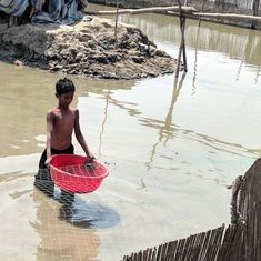 Japanese appetite drives crab farming in the Sundarbans