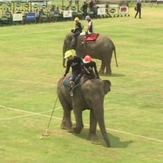 Watch: Playing polo on elephants may seem exotic, but this video reveals the abuse behind the scenes