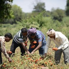 Why Haryana's plan to shield vegetable farmers from low prices might just work