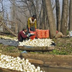 Kashmir's 'Mini Punjab': Growing vegetables reaps big dividends for Budgam's farmers