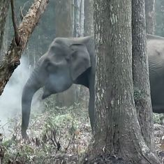 Watch: Wildlife experts in Karnataka came across this 'smoke breathing' elephant in the wild