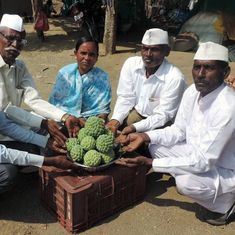 In Maharashtra, one village has found prosperity in custard apples