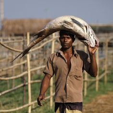 Climate change is changing the reproductive behaviour of the fish in the Sunderbans