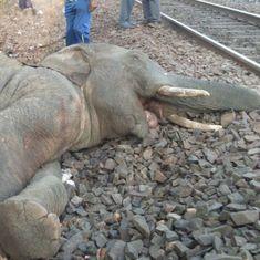 Odisha: Four elephants, including a calf, killed after train runs over them
