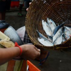 Formalin scare: Meghalaya bans import and sale of fish from other states for 15 days
