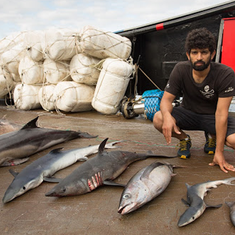 A sea captain who combatted illegal fishing explains why he gave up seafood