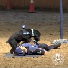 Watch: Adorable police dog attempts CPR on officer in viral video