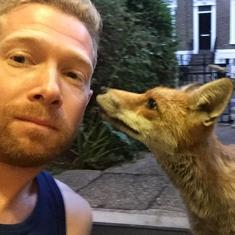 Watch: This is the fox whom a man made friends with in London (and then wrote a book about)