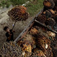 No country for women: The dark side of palm oil production in Mizoram