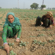 Why restrictions on renting agricultural land in India must go