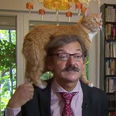 Watch: A serious political interview on live TV was derailed by a playful cat