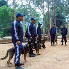 In Assam's Kaziranga, dogs are helping sniff out rhino poachers