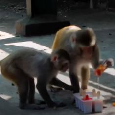 Watch: Animals at this Mumbai zoo are beating the heat with icy fruit lollies