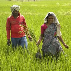 Why India's agricultural reforms will do little to boost farmer incomes