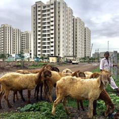 Centre bans livestock exports from all sea ports indefinitely: Report
