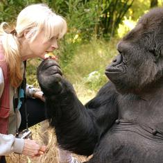 'An icon for inter-species communication': Koko, the gorilla who knew sign language, dies at 46