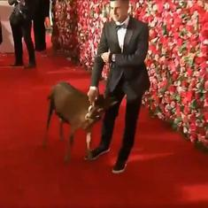 Watch: A goat on the red carpet cornered  the limelight at this year's Tony awards