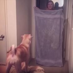 Videos: The 'What The Fluff Challenge' is the cutest prank to bamboozle your dogs