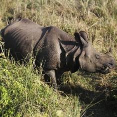 Assam Chief Minister Sarbananda Sonowal increases measures to protect rhinos in Kaziranga