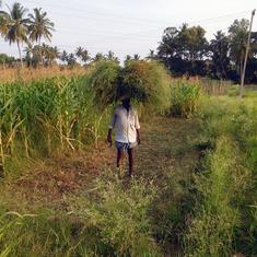 महाराष्ट्र : तीन महीने में 639 किसानों ने आत्महत्या की