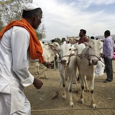 Eid: Meat sold in Haryana's Mewat will be checked by police after 'beef biryani' rumours crop up